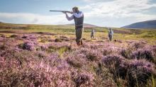 Ministers accused of blocking plans to ban burning of UK peatlands