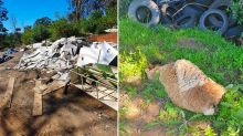 Dead animal among piles of rubbish dumped in Sydney parkland