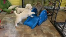 Cat challenges puppies for throne dominance