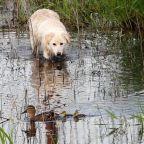 Moscow rounds up stray animals, kills rats over coronavirus fears