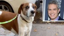Andy Cohen Reunites with His Dog Wacha Months After Placing Him in New Home: He's 'Happy and Healthy'