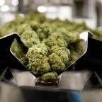 Marijuana Stock Aphria Tanks After Net Loss Widens