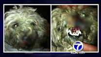 Two dogs shot in the face