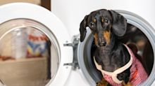 The $15 laundry secret to removing pet hair from clothing — for good