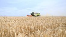 Wie Spekulanten regionalen Bauern das Land abjagen