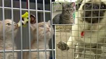 More than 100 cats and dogs kicked out of shelter