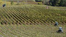 Donald Trump contre le vin français : une menace prise au sérieux dans les vignobles