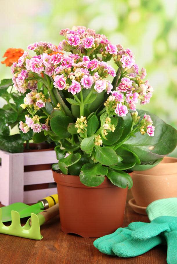 7 plantas de interior que purifican el aire for Cuales son las plantas para interiores