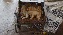 La carne de perro regresa a la mesa de los chinos