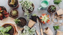 Opinion: Do you love plants more than people? Say hello to 'plantfluencers'