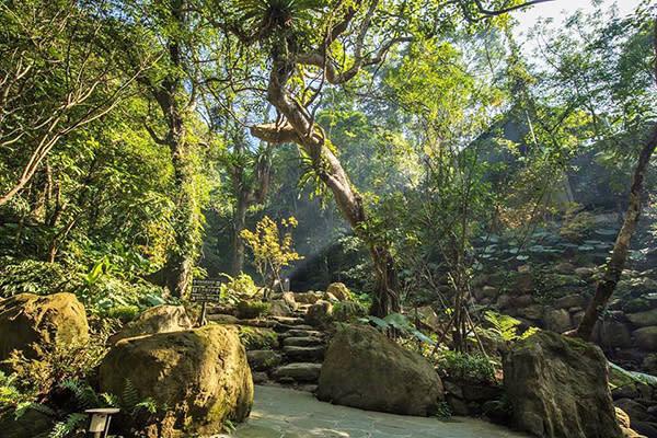 大板根森林是全台唯一僅存的低海拔原始熱帶雨林