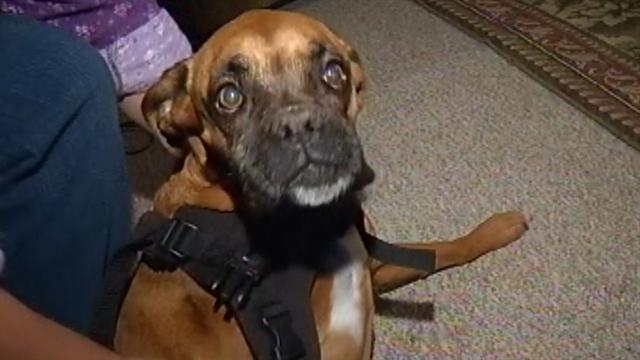 Dog's wheelchair stolen, police say