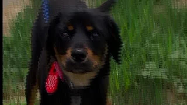Dog tied to train tracks survives