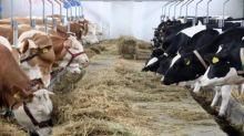 Tassa sulla carne, la proposta a Bruxelles: batosta del 25% per i consumatori