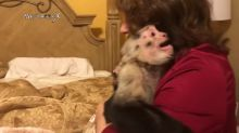 Capuchin monkeys scream in excitement upon grandma's return!