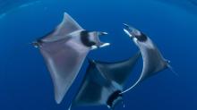 Fantastische Unterwasserbilder zeigen, wie schön Meerestiere sein können
