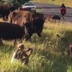 Bison Attacks, Rips Pants Off Woman Who Sat In Middle Of Herd To Snap Photos