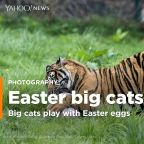 PHOTOS: Egg-travagant treats for big cats