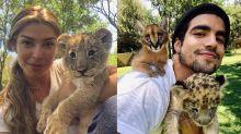 Grazi Massafera e Caio Castro brincam com leões na África do Sul