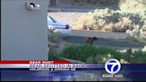 Bear spotted in Albuquerque backyard