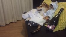 Pampered dog and cat chill out for movie night