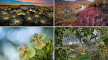 Cerrado sunrises and morning mists: the International Garden Photographer of the Year category winners