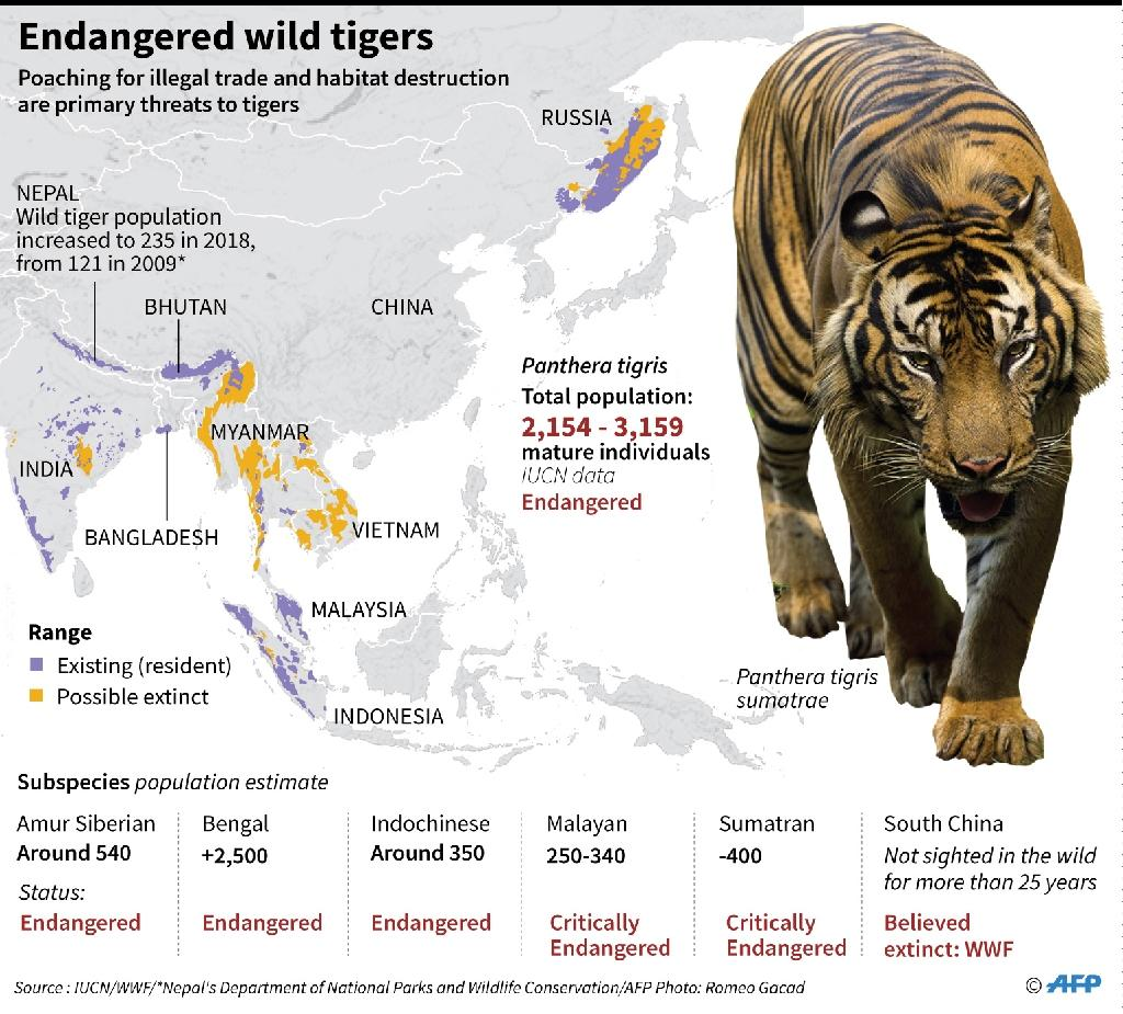 Factfile on wild tiger population and range. (AFP Photo/Gal ROMA)