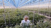 Tilray makes acquisition, Express CEO exits, Tesla denies battery reports