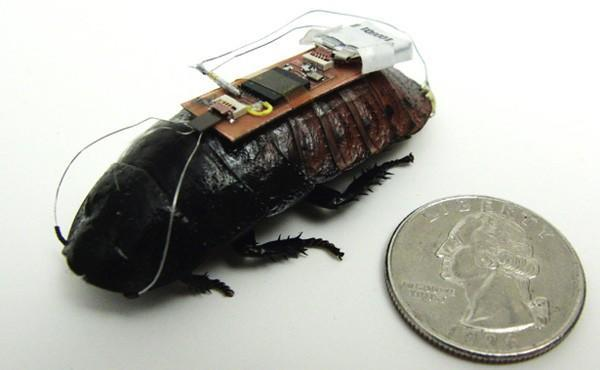Researchers take full control of cockroach's movement, turn it into a wireless sensor