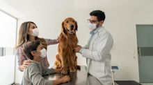 Up 100% in a Year, Can This Animal Health Stock Keep Climbing?