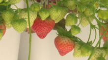 Attention apartment dwellers: here are the secrets of small-space gardening