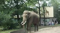 Prankster Elephant Throws Poo At Visitor