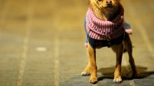 Why Do Dogs Shake? 9 Reasons Why