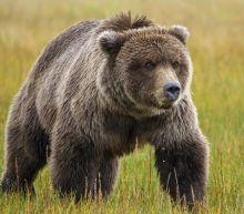 Man rescued in Alaska after week-long bear attack ordeal