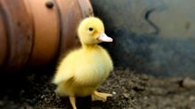 Donald y un pequeño pato protagonizan un tierno comercial sobre Disneyland París