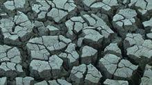 """En Portugal, una sequía """"nunca vista"""" angustia a los ganaderos"""