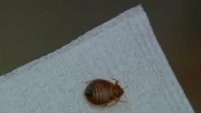 Does Central Coast Have A Bed Bug Problem?