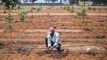 'To Double Farm Incomes, India Must Get People Off Farms'