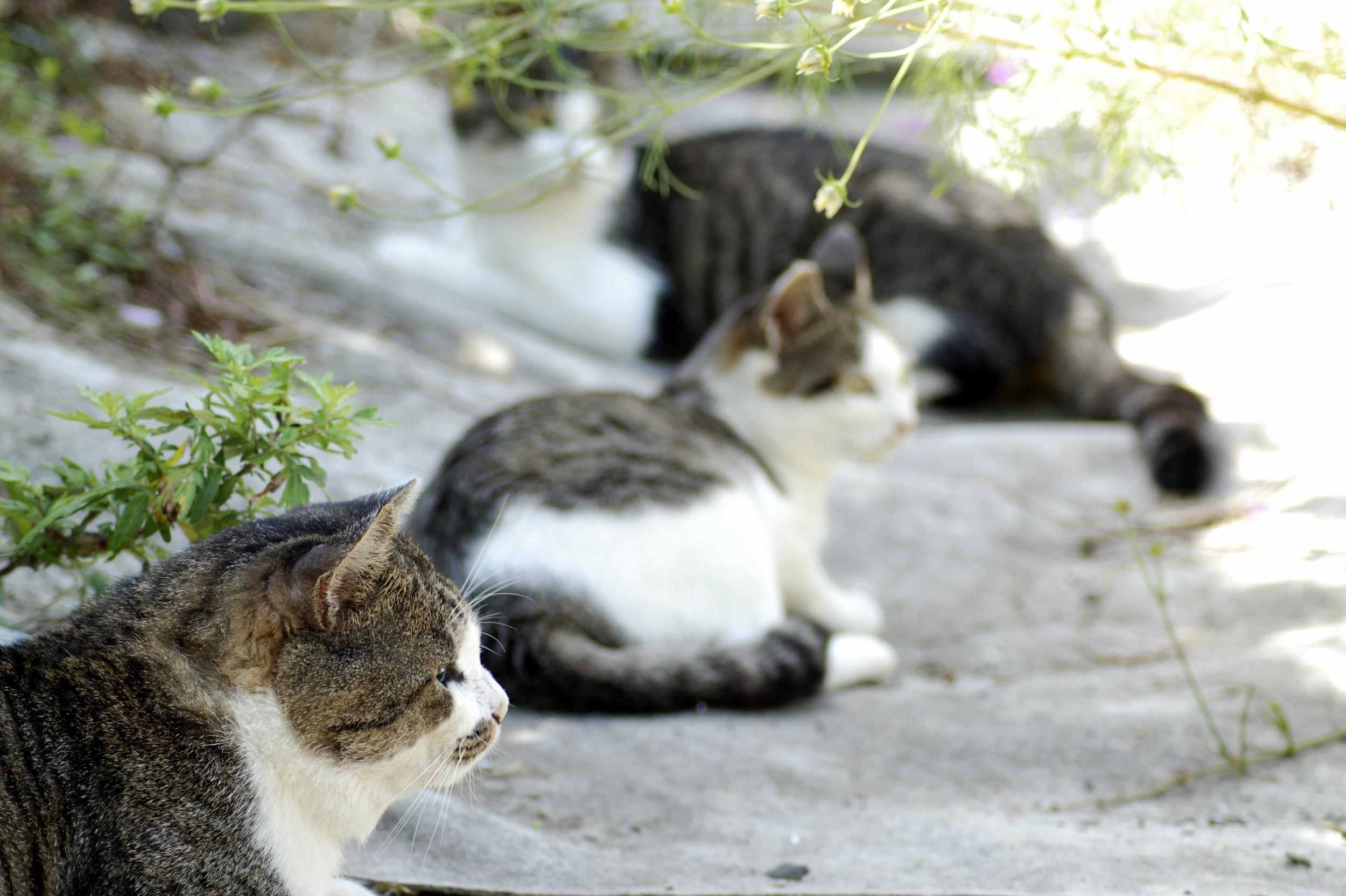 <p>The island of Tashirojima, or Cat Island, off the coast of Ishinomaki in Japan has a larger cat population than it has humans. The people who live on the island are those who take care of the cats. To the locals the cats represent luck and fortune, and there is even a cat shrine at the centre of the island, along with cat-shaped cottages. Cat-loving tourists are welcome to visit the island, but dogs are not allowed.</p>