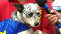 Extreme Canines Flip Over Visiting WCCO
