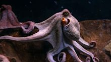 15 Incredible Octopus Photos and Facts