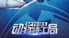 "iQIYI Animated Film ""Spycies"" Makes Finalist for Golden Goblet Award at the Shanghai International Film Festival"