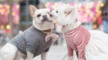 'Fashionista' dogs featured in engagement photos around Washington, D.C.