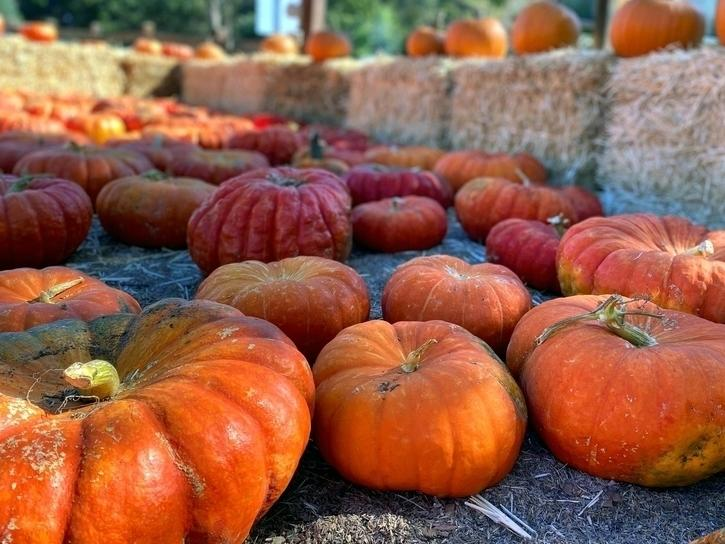 Is your family planning to visit a pumpkin patch this weekend in the Tampa-area? Here's the latest weather forecast.
