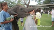 Elephant 'Kisses' Bridesmaid on Wedding Day