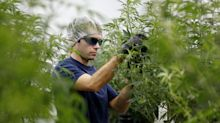 Canopy Growth reports $1.3B net loss in Q1