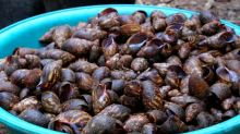 Snail entrepreneur sells out fast in Cameroon