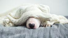 """Hund wird wegen seiner süßen """"Augenbrauen"""" zum viralen Hit"""