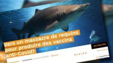 Pourquoi faut-il se méfier du chiffre de 500 000 requins menacés par l'arrivée d'un vaccin contre le Covid-19 ?