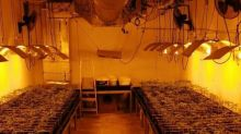 Catalan Police Swoop on Chicken Coop to Uncover Marijuana Grow House